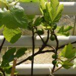 Rośliny balkonowe i tarasowe